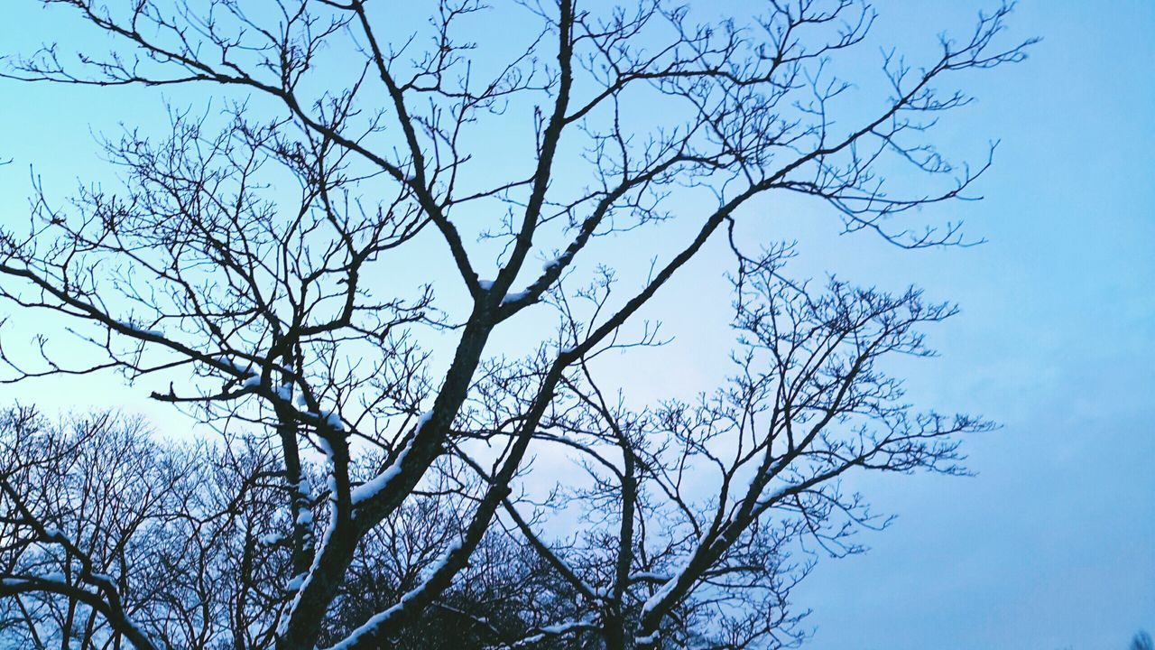 Pastel Power Pastel Sky Pastel Colors Winter_collection Winter Nature Outside February Cold And Frosty Winter Trees Ice On The Tree Snow Covered Trees