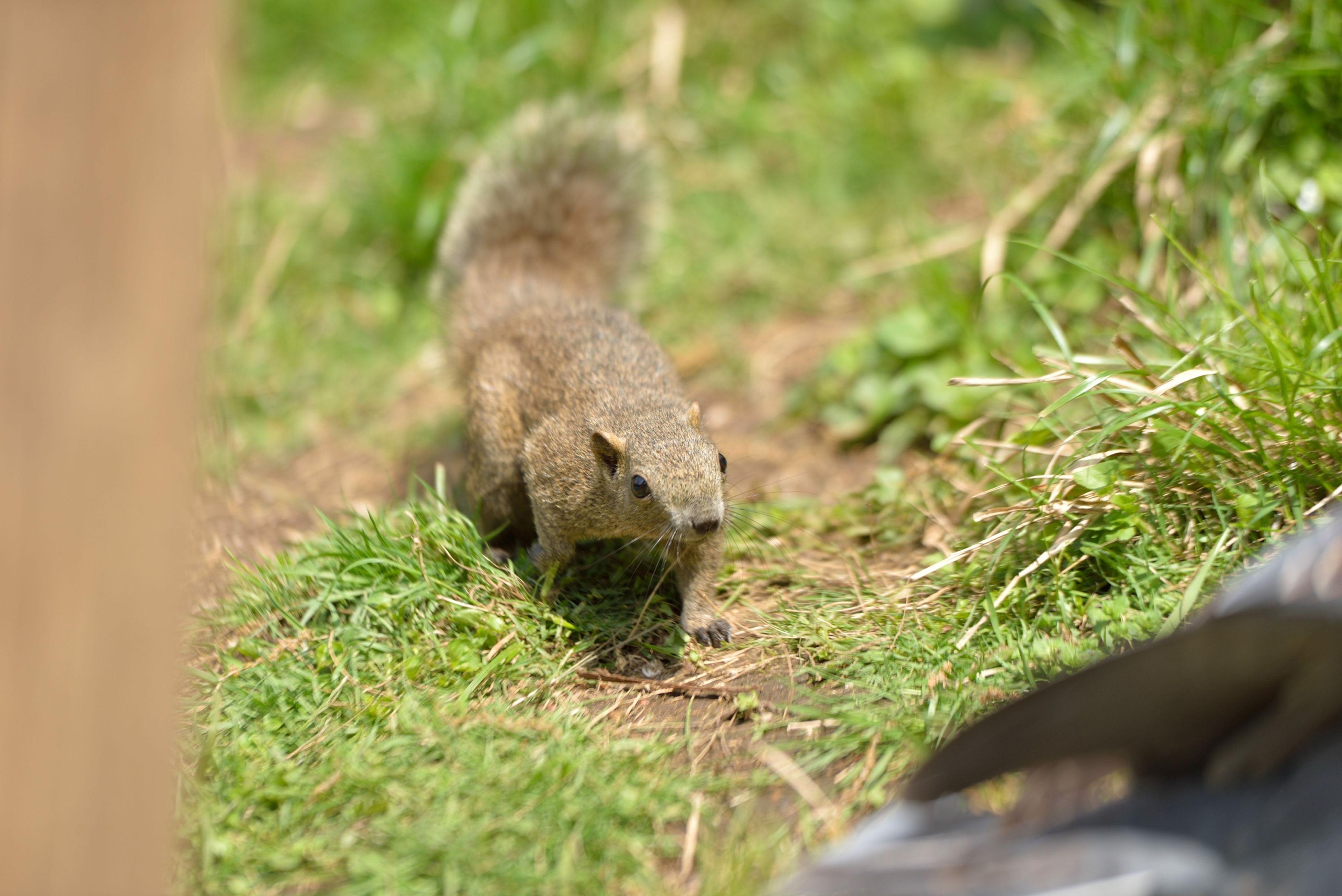 Cute Squirrel Smallanimal Animals 台湾リス リス 町田リス園