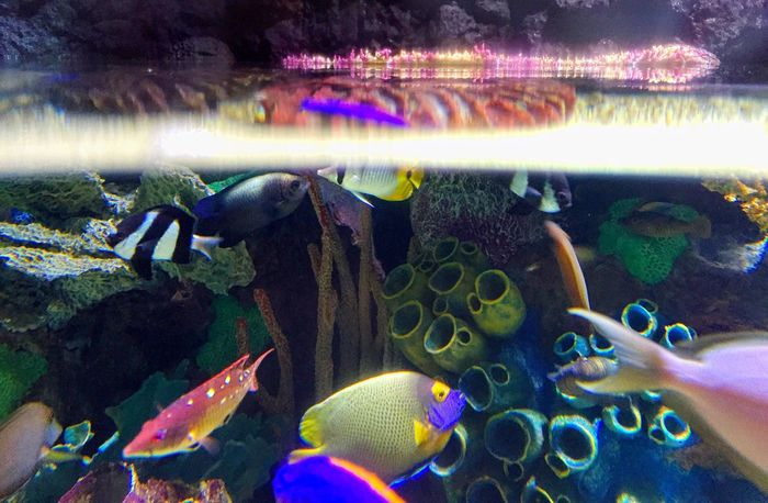 Aquarium Aquarium Life Aquatic Fish Damsel Coral Live Rock Calming Calm Calmness Colors American Travel Photography Travel Vacation Blue Green Nature School