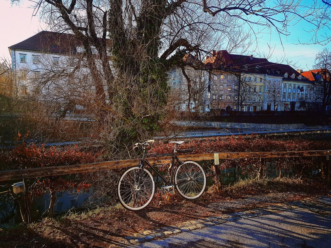 Winter in Ljubljana, Slovenia. Ljubljana Slovenia Winter Outdoors Tree Nature Bycicle Wintertime Landscape City View  Colors Photo Of The Day Scenics Beautiful Urban Skyline Cityscape Beauty In Nature Day View Leaves Cold Cold Days Bycicle Art Tree And Sky Sky EyeEmNewHere The Street Photographer - 2017 EyeEm Awards The Great Outdoors - 2017 EyeEm Awards