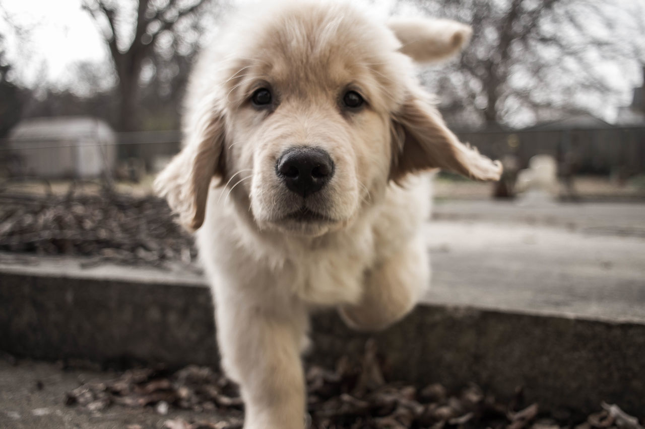 Beautiful stock photos of welpen,  Animal Themes,  Close-Up,  Day,  Dog