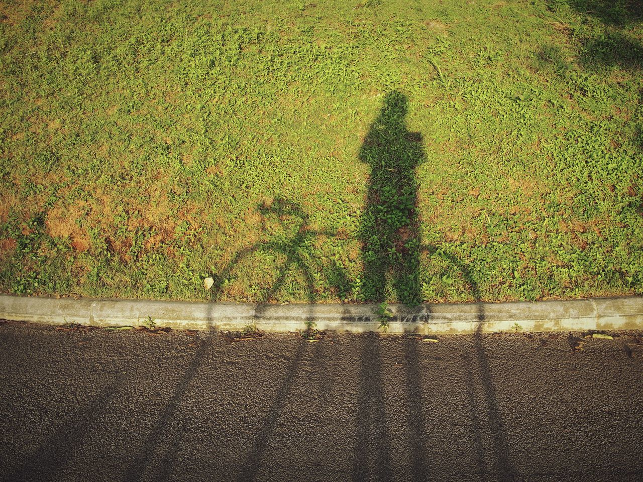 Day Outdoors Nature Green Color Grass Shadow And Light Cycling Human Ride Fuji Bicycle Park Life Tree Bicycle Nature The Great Outdoors - 2017 EyeEm Awards Sommergefühle