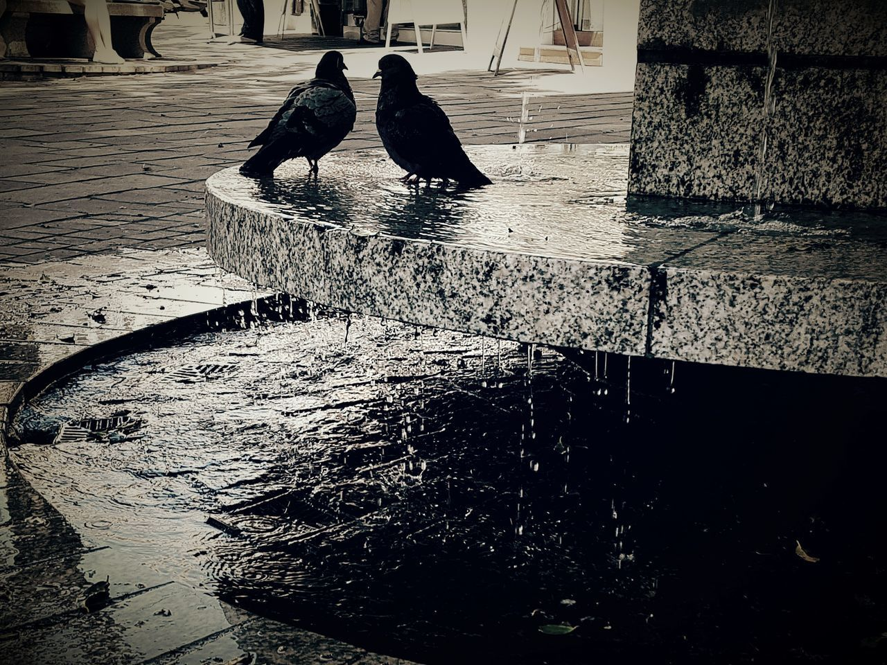 bird, animal themes, water, animals in the wild, reflection, day, animal wildlife, perching, outdoors, real people, raven - bird, nature