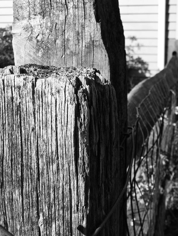 EyeEm Masterclass Fence Beauty Of Decay Decay Explore Your Outdoors Iphone 6 Plus Camera+