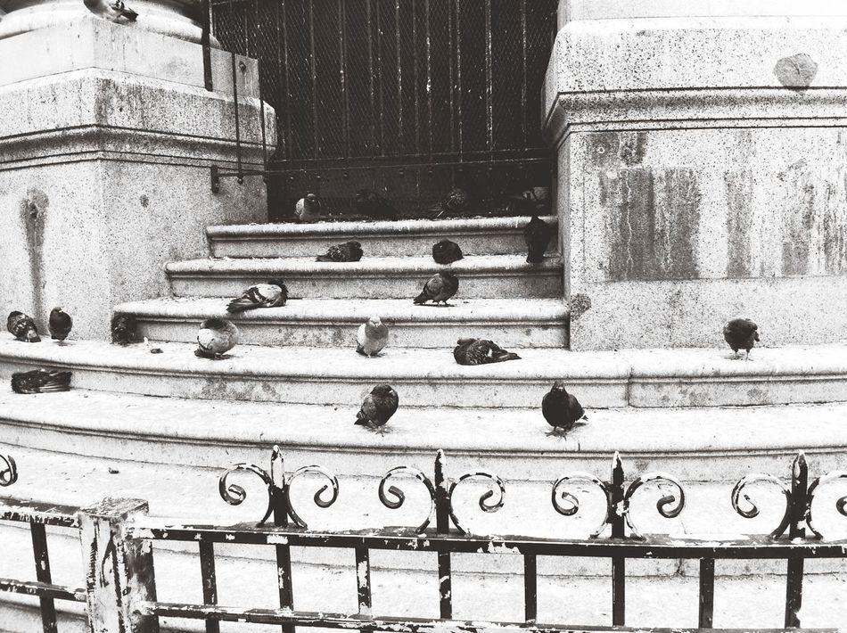 Black & White Capa Filter Steps Downtown