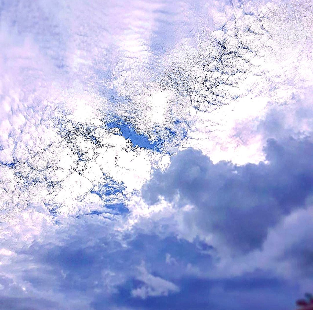 Cloud - Sky Sky Nature Cloudscape No People Low Angle View Beauty In Nature Backgrounds Close-up Outdoors Day Full Frame Scenics Tree Freshness