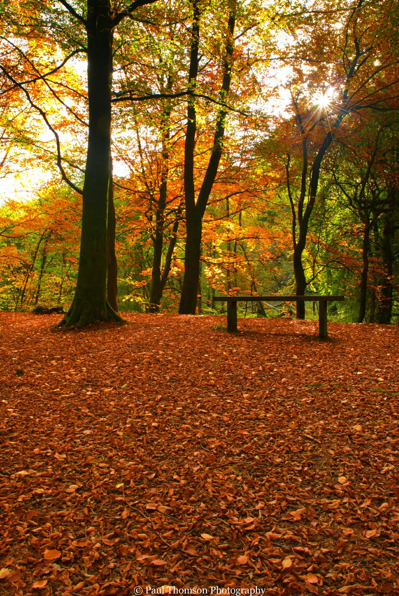 Autumn Light Gelt Woods Landscapes Outdoor Woods Brampton Uk Nature Walking