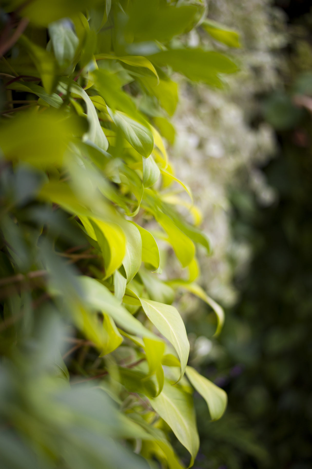 Nature in abundance. Background Backgrounds Beauty In Nature Bokeh Close-up Day Flower Focus Focus On Foreground Foilage Green Green Wall Growing Growth Leaf Leaves Nature No People Nobody Outdoors Plant Wall Water White Yellow