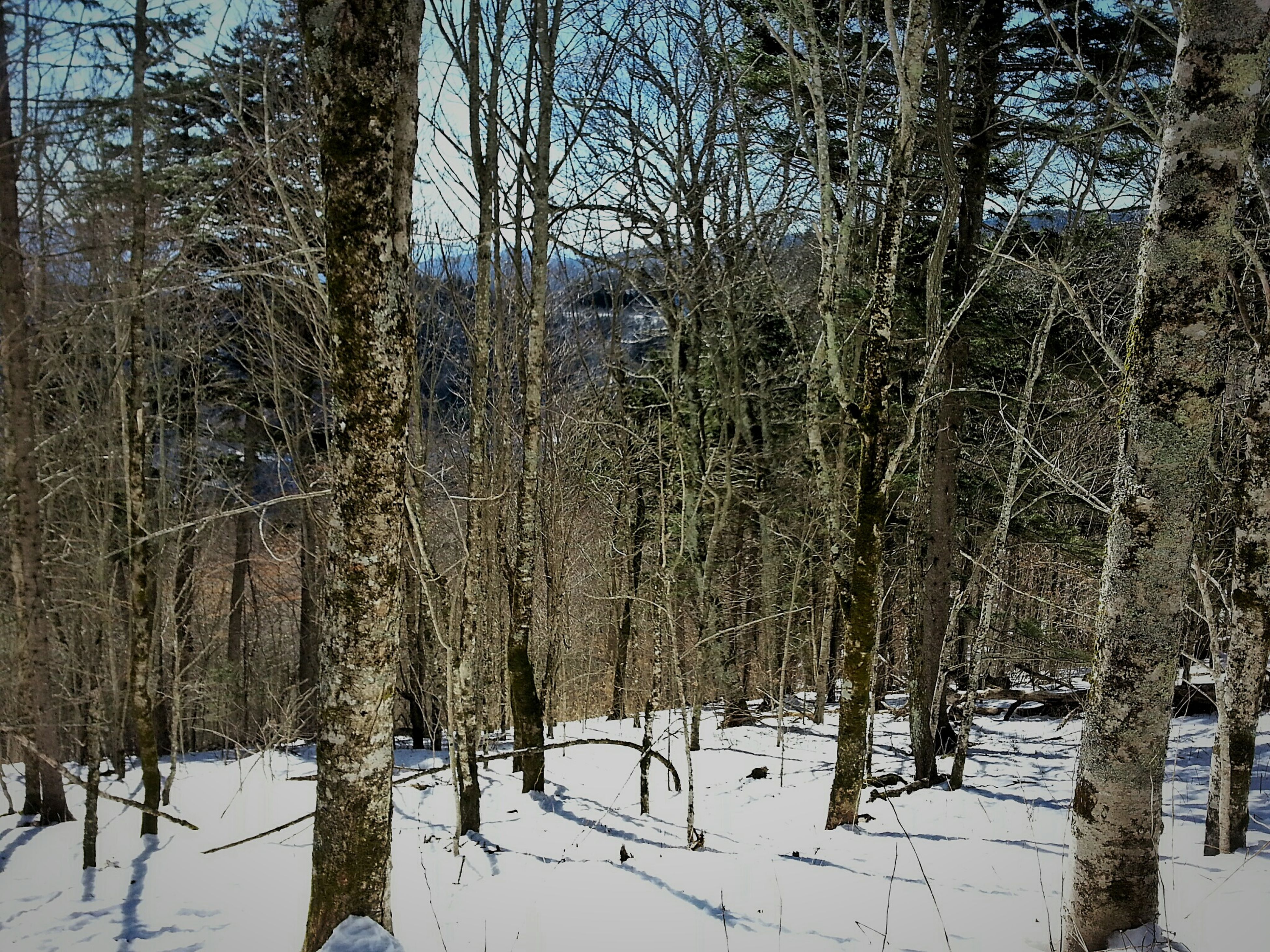 snow, winter, cold temperature, tree, season, bare tree, weather, tranquility, tranquil scene, landscape, covering, nature, beauty in nature, frozen, scenics, branch, tree trunk, forest, field, cold