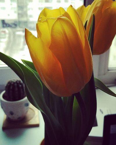УрурурFlowers Spring Nice❤