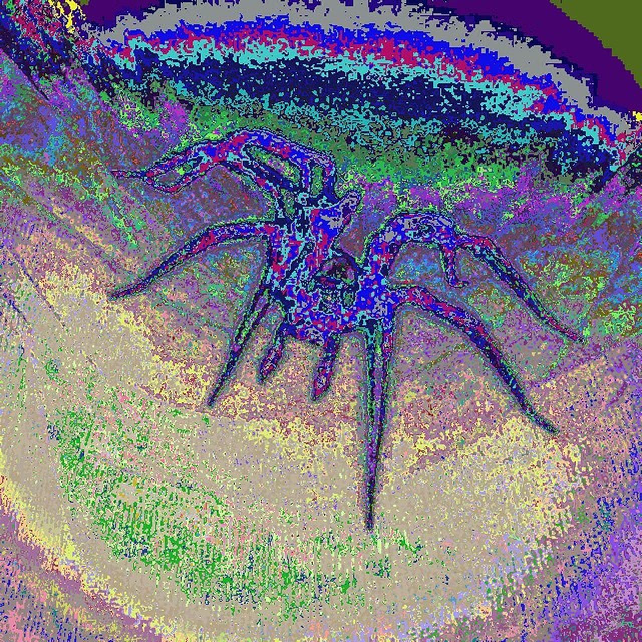 Glitchart Edit Spider Instagood Glitchcult Artistic Animalphotos