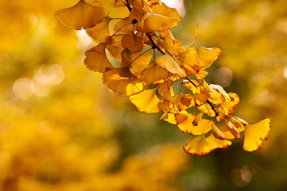 Beautiful stock photos of tree, Autumn, Beauty In Nature, Branch, Change