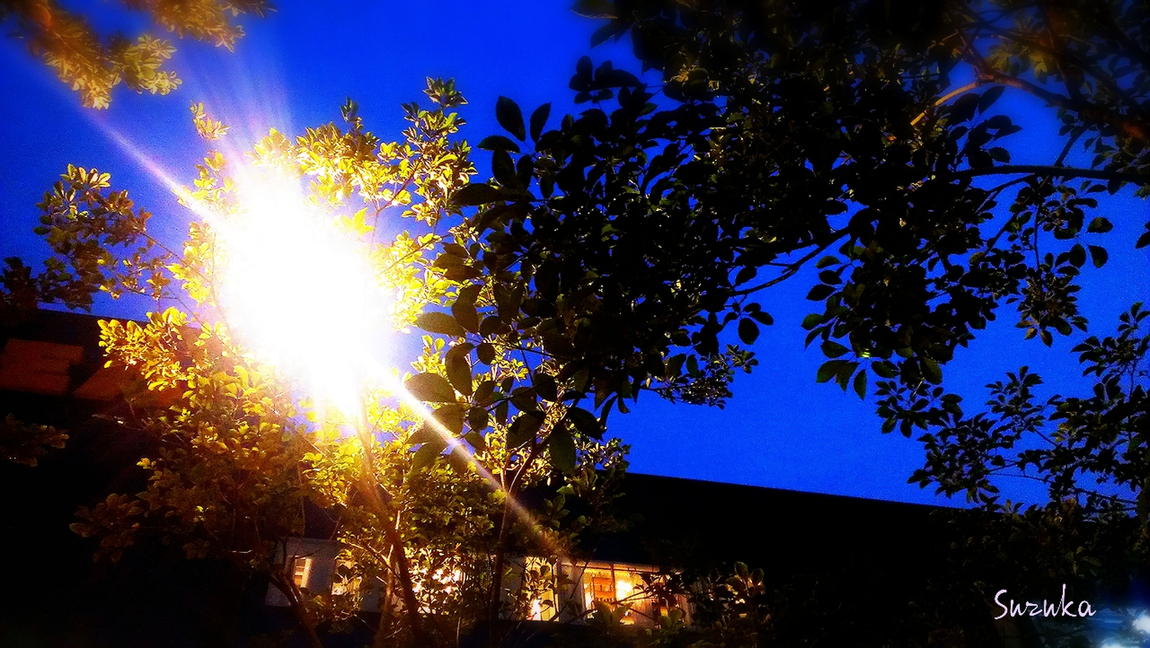 low angle view, tree, sun, sunlight, building exterior, sunbeam, blue, built structure, architecture, clear sky, lens flare, growth, branch, silhouette, nature, sunny, sky, outdoors, bright, house
