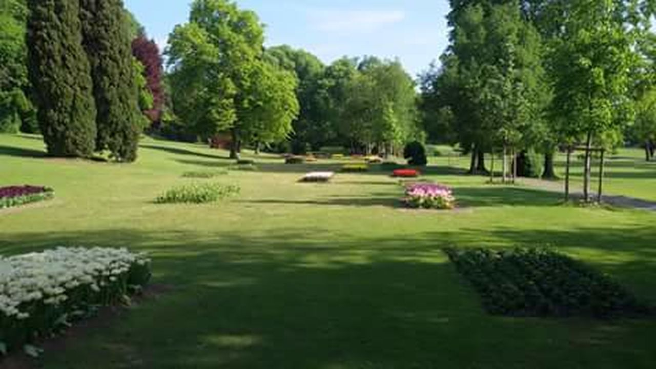 tree, green color, grass, golf course, nature, green - golf course, day, golf, no people, flower, outdoors, beauty in nature, sky