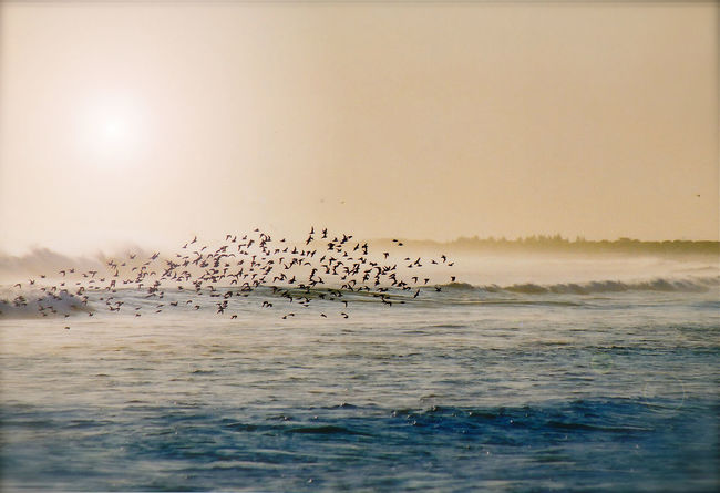 Again, To Drift Bird Flying Animal Themes Water Flock Of Birds Animals In The Wild Scenics Sunset Sea Nature Beauty In Nature Tranquility Sky Brazil Arraialdocabo Film Photography