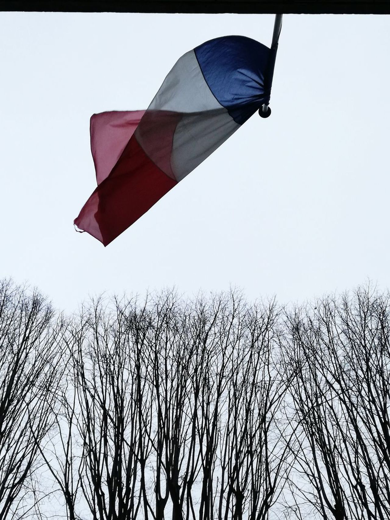 French Flag Drapeau Français Low Angle View Outdoors Trees Mairie Flag No People Day Sky