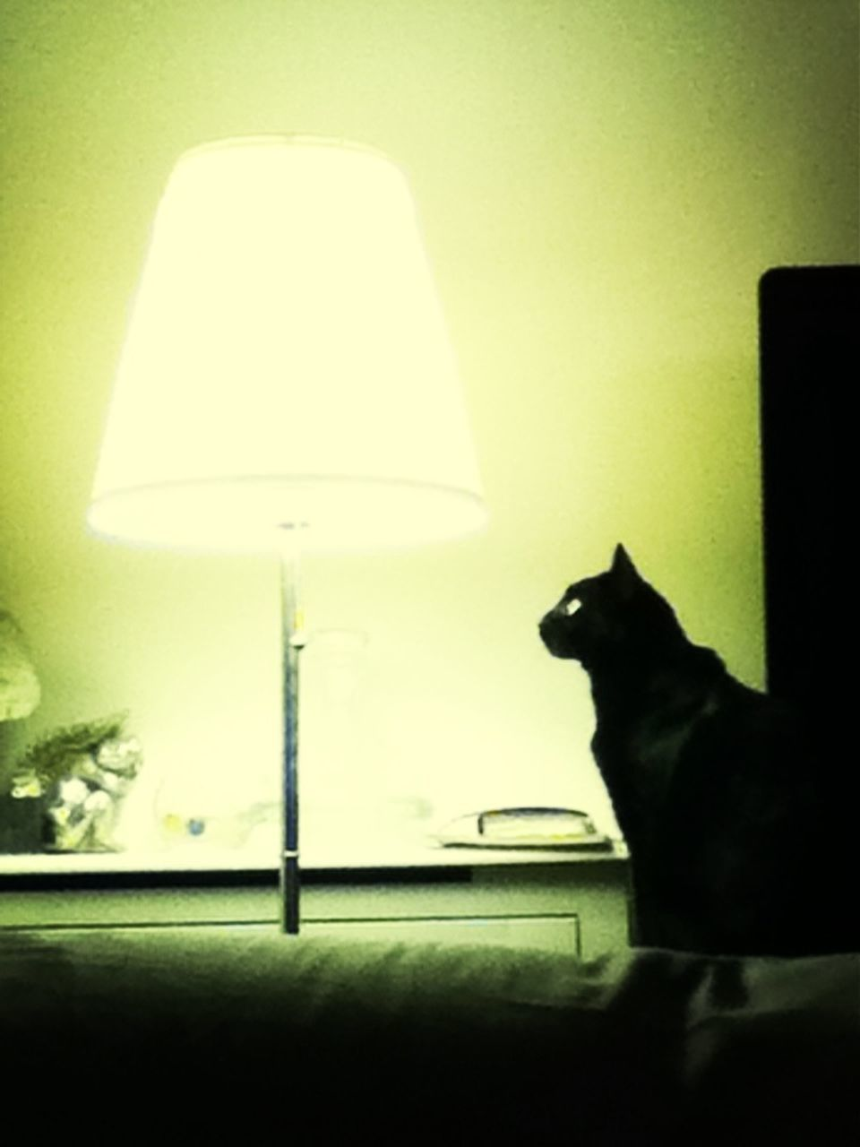 indoors, pets, domestic cat, domestic animals, one animal, lamp shade, animal themes, electric lamp, mammal, home interior, sitting, feline, no people, illuminated, close-up, day