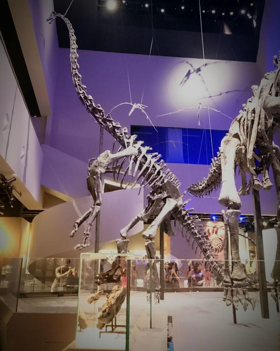 Skeleton Dinosaurs Fossils Museum Leekongchiannaturalhistorymuseum