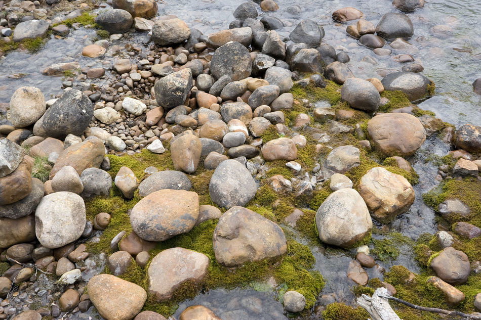 pebbles and moss on the riverbank of athasbasca river - jasper national park, canada Abundance Alberta Backgrounds Beach Beauty In Nature Canada Close-up Full Frame High Angle View Jasper National Park Large Group Of Objects Nature No People Outdoors Pebble Pebble Beach Pebble Beach Pebbles Pebbles And Stones River Riverside Rock - Object Shore Stone - Object Water