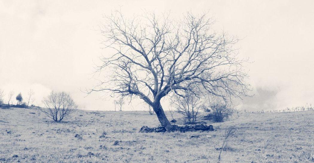 Dream EyeEm Nature Lover Nature Ceviz Agac Nature_collection EyeEm Best Shots Alone Sektör Yapım Fantastic