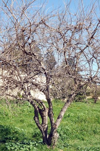 Arbre Bare Tree Beauty In Nature Branch Brindilles Day Herbre Landscape Nature No People Outdoors Paysage Scenics Sky Tranquility Tree Vert