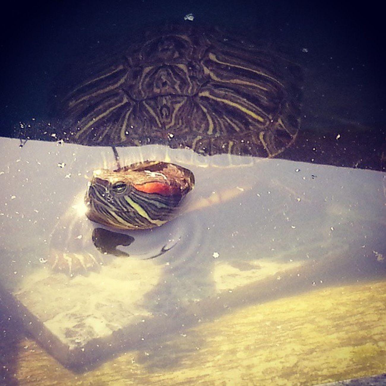 Turtles @ MIST