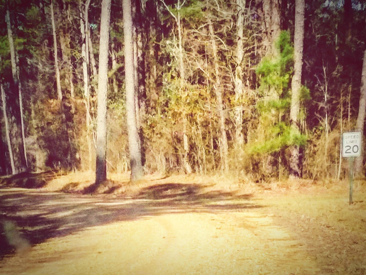 Outdoors Beauty In Nature Dirt Road Speed Limit Sign Speed Limit No People Sunlight And Shadow
