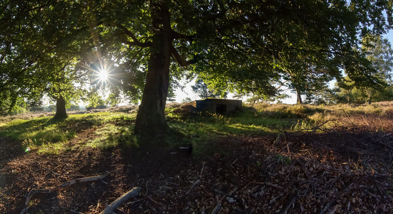 In der Heide, Mehlingen Beauty In Nature Daylight Grass Green Color Growth Illuminated Mehlingen Mehlinger Heide Nature No People Outdoors Panophotography Panorama Plant Sun Sunbeam Sunlight Tranquility Tree Trees