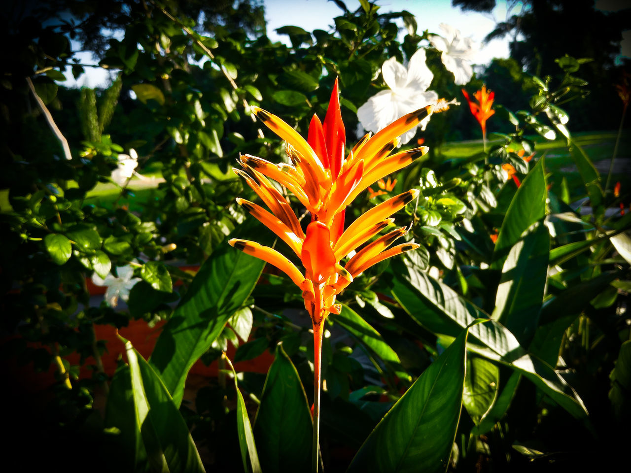 UFAC Acre Rio Branco Brasil Amazonia Flor Nature