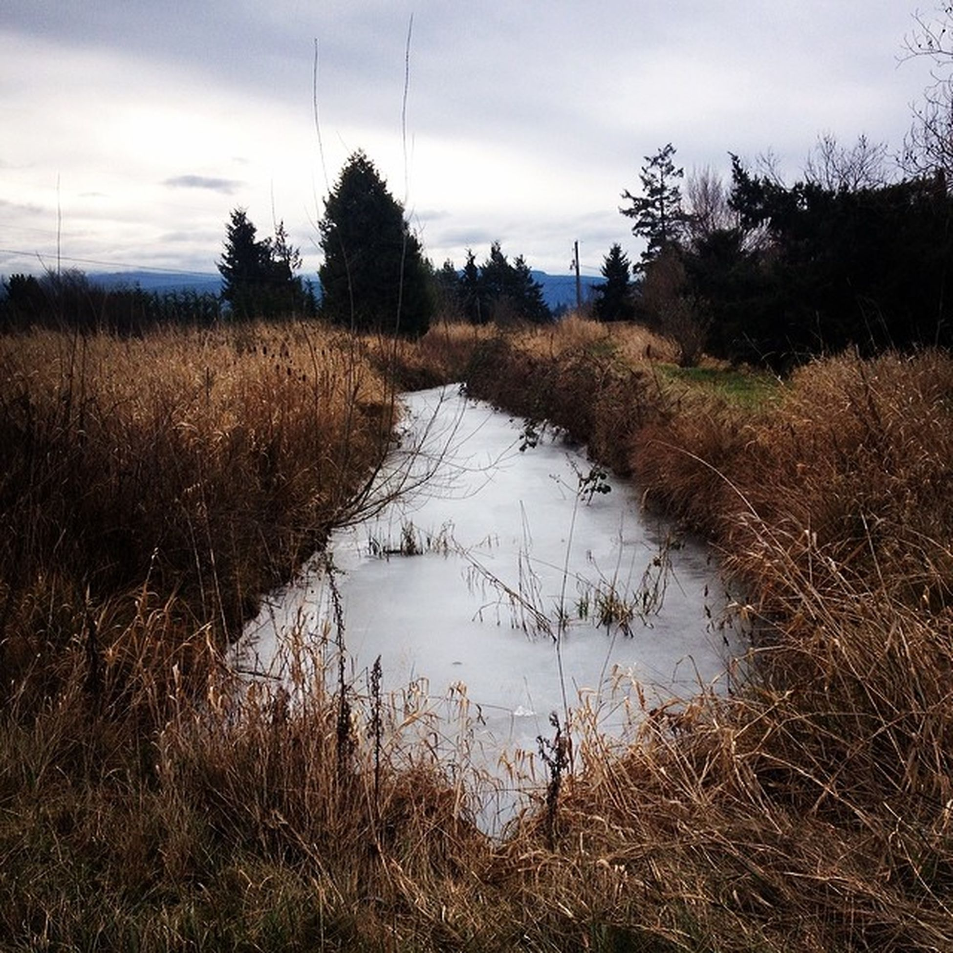 ❤️ Frozencreek Beautiful Home PNW washington iloveithere overcast beauty
