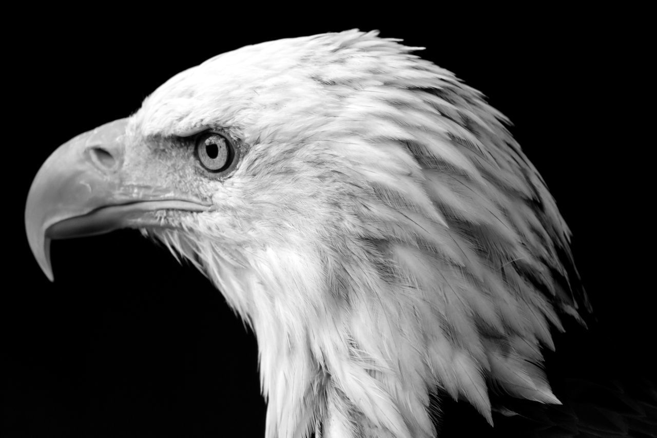 American Profile EE_Daily: Black And White Bw_collection American Eagle