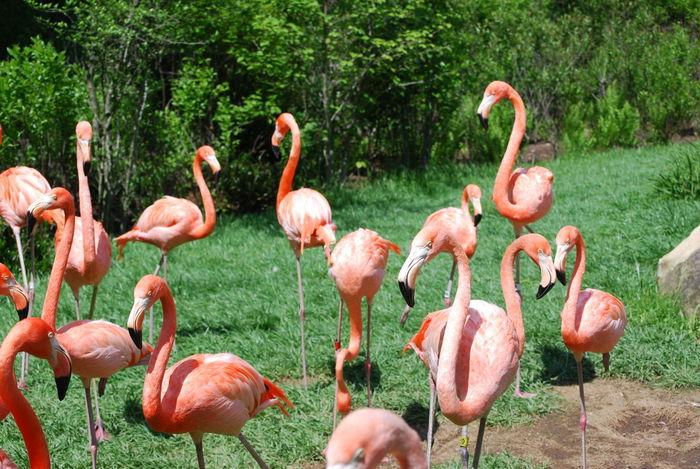 Animal Themes Animal Wildlife Beauty In Nature Bird Day Flamingo Flock Of Birds Nature No People Outdoors Pink Flamingo Ponk Tree Wildlife Photography