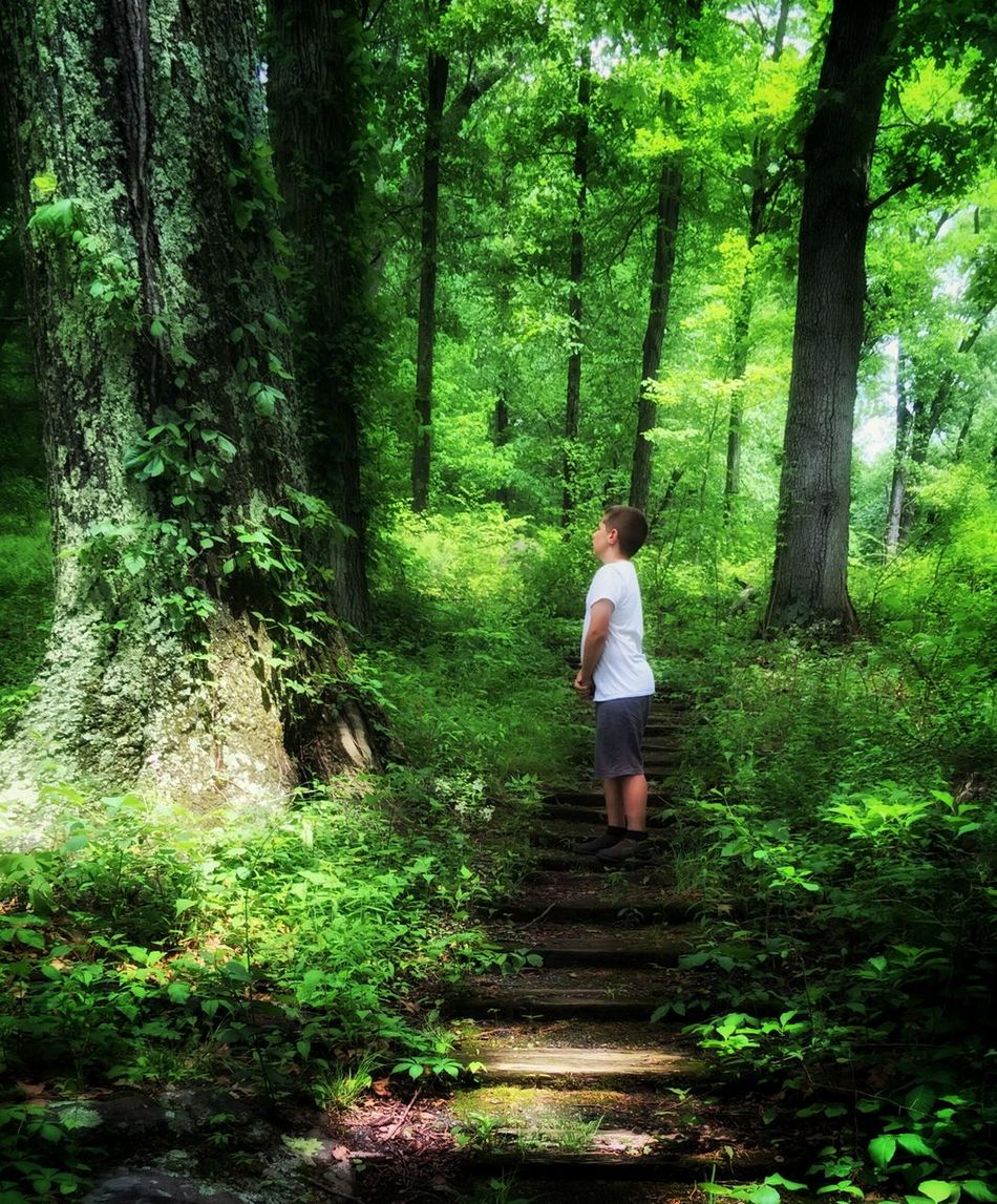 In The Woods Boy In The Woods Nature Photography Walk In The Woods Tree Lover Child In The Woods Alone Alone In The Woods Child Walking In The Woods Hidden Gems  Autistic Child Autistic Boy Alone With Autism Nature Lover On The Way Lost Curiosity Forest Path Forest Nature Walk This Way Followme My Favorite Place Showcase June People And Places
