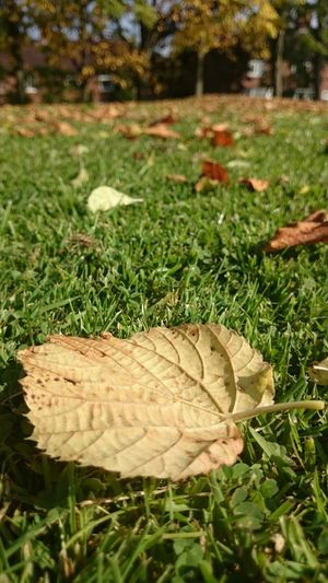 Fall Beauty Nature Autumn🍁🍁🍁