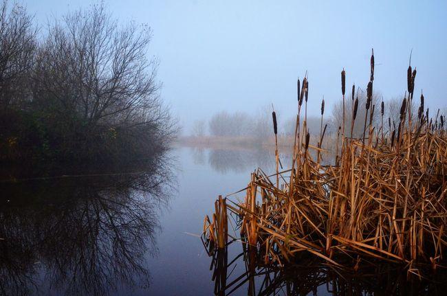 Misty Lake Nature Winter Ireland Nikon D7000