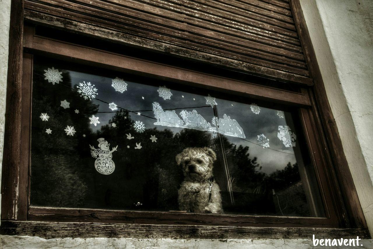 Finestres Ventanas Callejeando Window Puertas Y Ventanas País De L'olivera Nadal