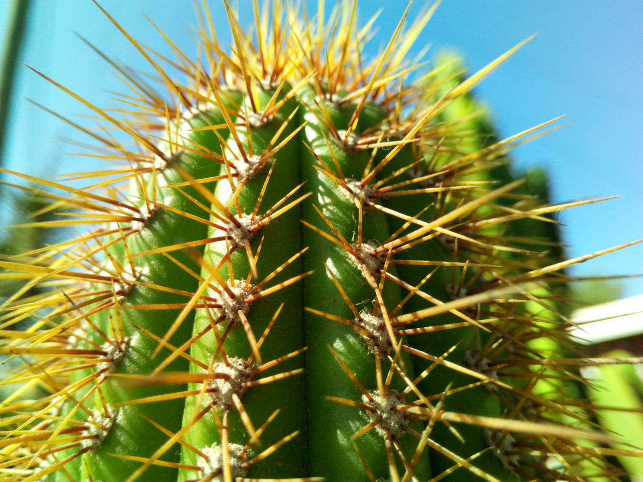 Don't touch me. Growth Nature Close-up Plant Cactus Green Color Day Beauty In Nature Taking Photos Green Life On Stones Colors And Patterns
