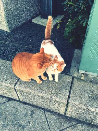 なかよし Cat Lovers Enoshima Love