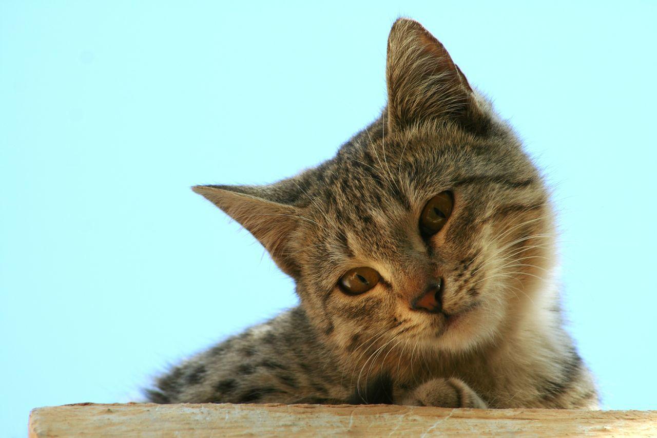 Beautiful stock photos of katzen, Animal Themes, Cat, Clear Sky, Close-Up