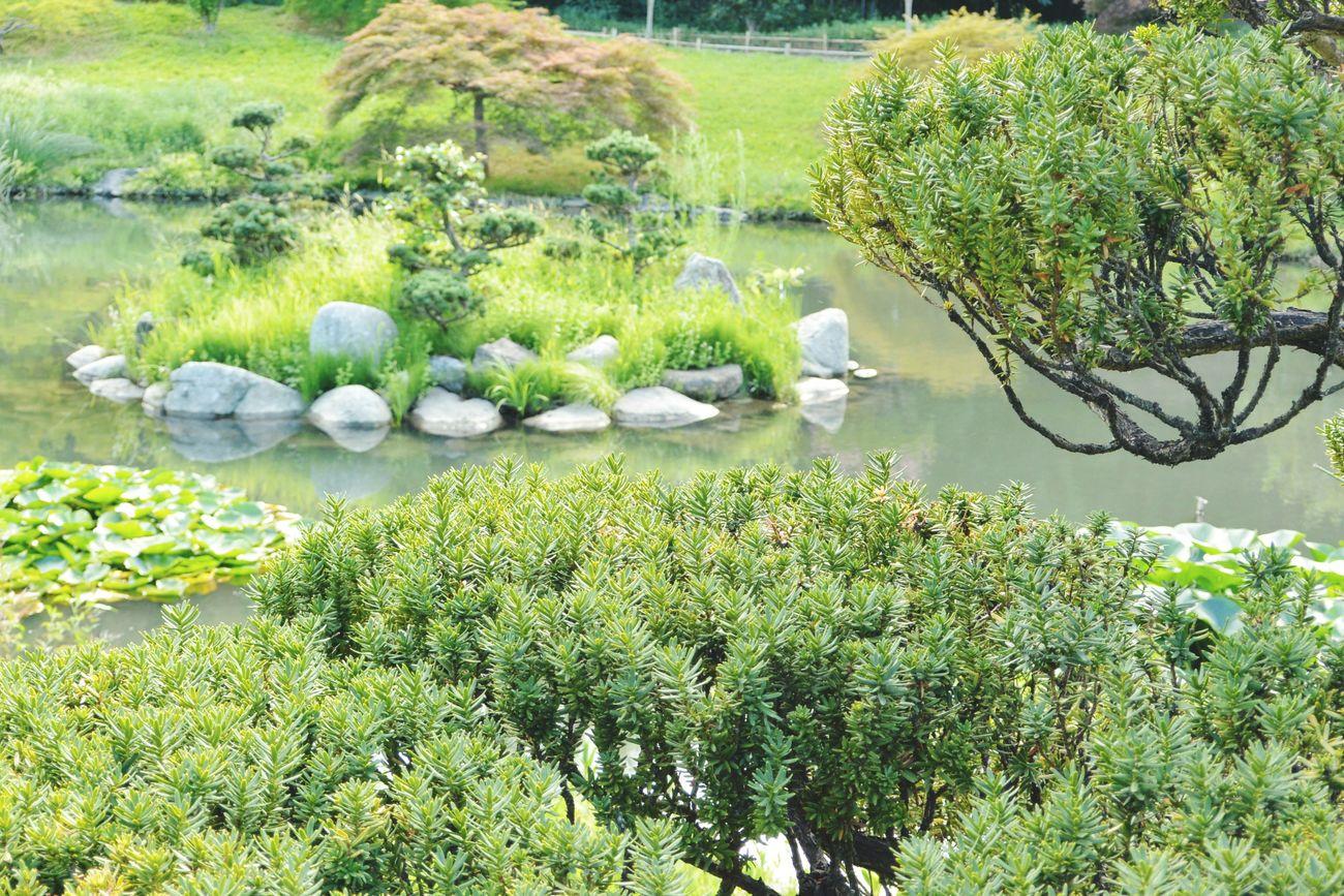 Vue sur une petite île juste magnifique Asian Garden Cloud Tree Zen La Bambouseraie Anduze Holiday Memories South France