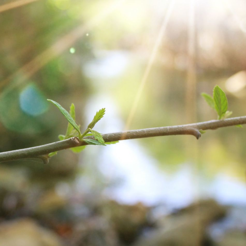 Plant Leaf Focus On Foreground No People Close-up Nature Growth Day Outdoors Green Color Animal Themes Sun Glare Sun Reflection Life Sun Glare And Plant Simplicity Simple Beauty