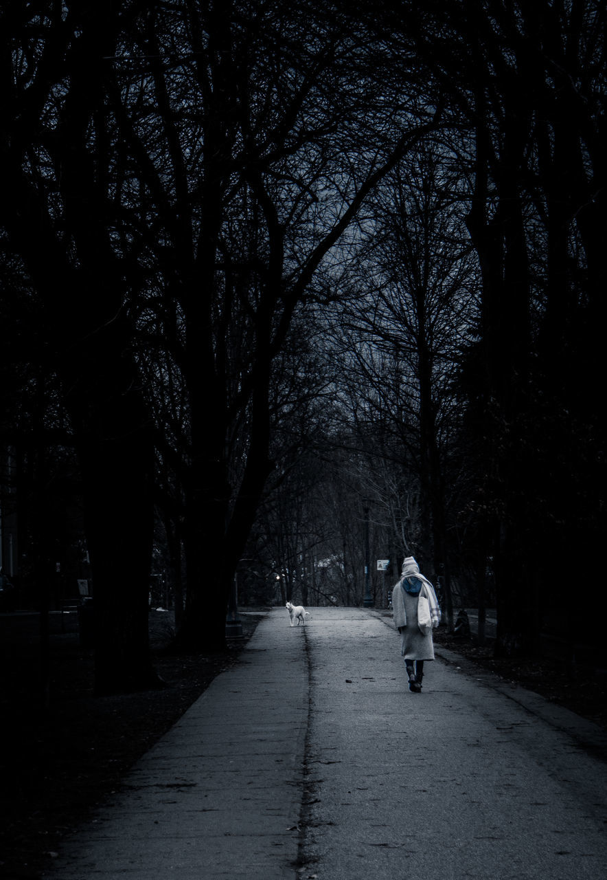 rear view, tree, full length, walking, real people, one person, transportation, the way forward, bare tree, outdoors, road, night, men, women, nature, warm clothing, adult, people