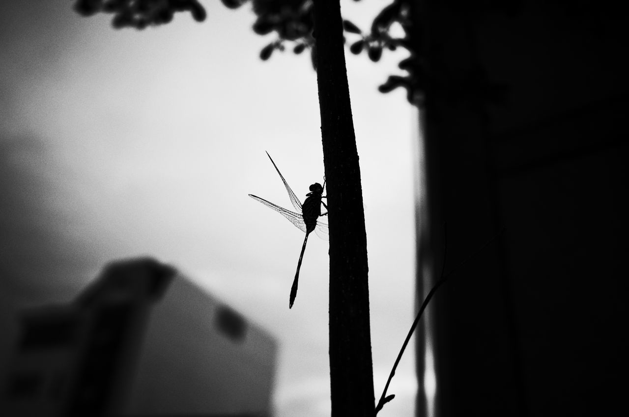 #naturelover :D animal themes animal wildlife Animals in the Wild beauty in Nature bnw_captures bnw_friday_eyeemchallenge focus on foreground hoang ann Nature one animal sky week on eyeem