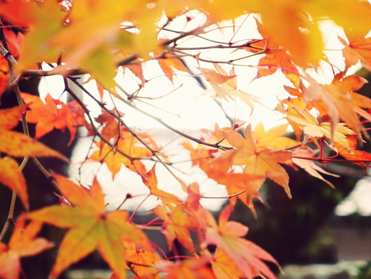 Kyoto,japan Taking Photos Travel Miuntains 先日の雨でほとんどもうなかった(;_;)