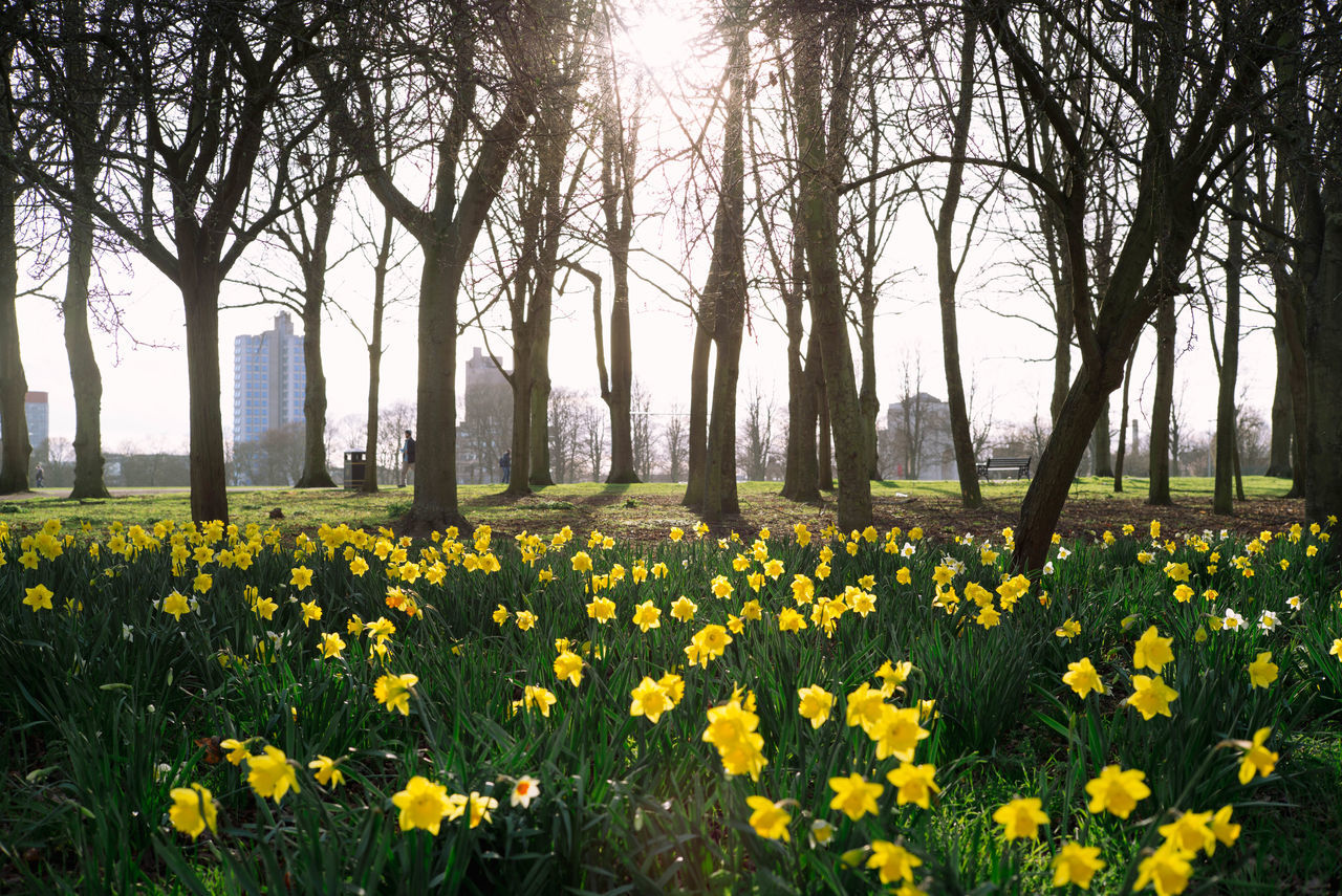 Spring is here! Beauty In Nature Day Flower Flower Head Fragility Freshness Growth Leicester Nature No People Outdoors Plant Spring Spring Flowers Tree Uk United Kingdom Yellow Art Is Everywhere Break The Mold