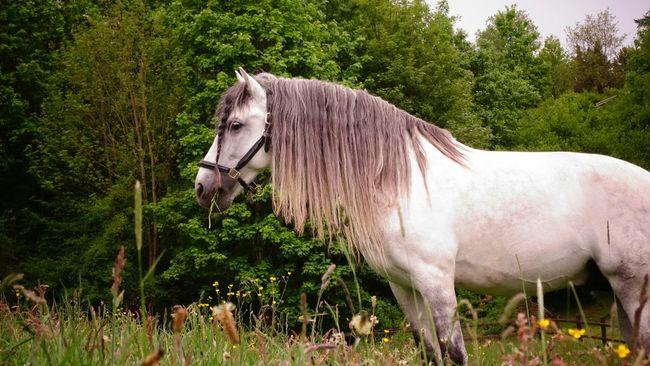 Germany Sauerland Country Life Ilovenature Eyeem Love My Homeland Eyemnaturelover Horses Iloveanimals Ilovehorses Pets Corner Pet Portraits