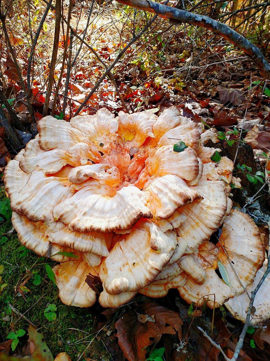 Crazy Mushroom Look At What I Found Beautiful Nature EyeEm Nature Lover Mobilephotography Nature West Virginia Exploringpaidoff EyeEm Best Shots
