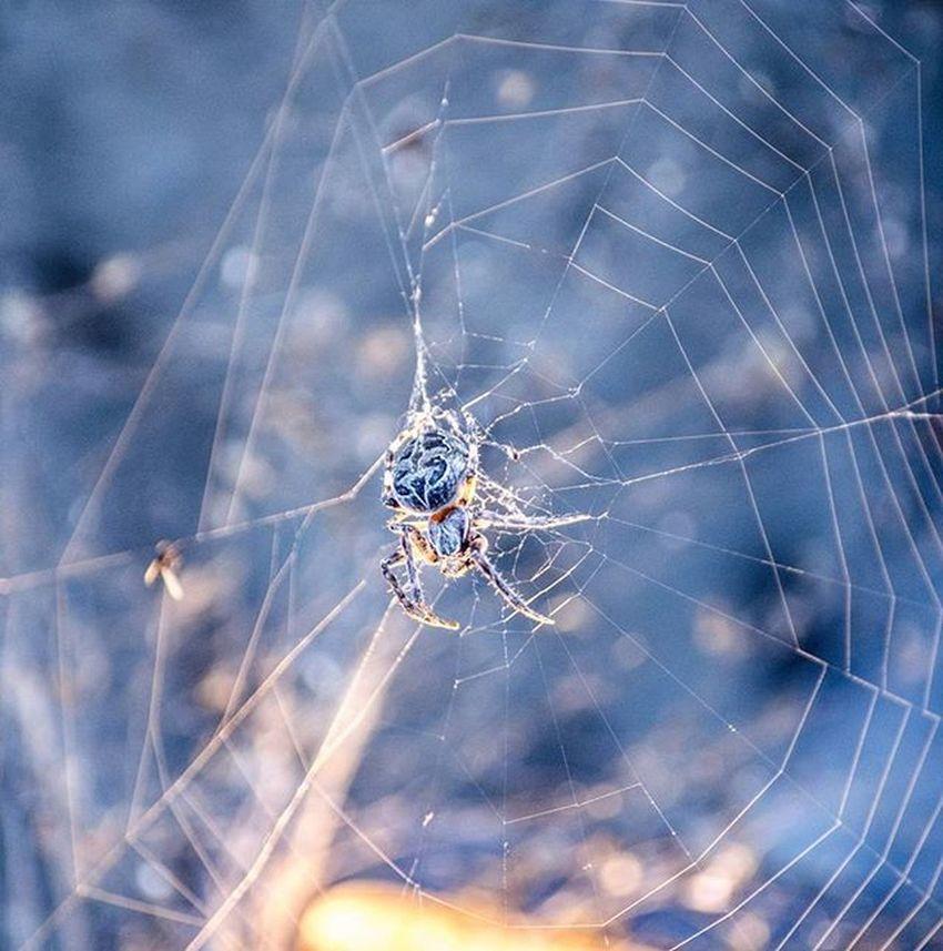 Spiders Creepycrawly Arachnids Arachniphobia Ihatespiders Sopretty Nature Naturephotography Wildlife Ygk Downtownkingston CanadianCreatives @natgeo Natgeo @animalplanet @viewbug
