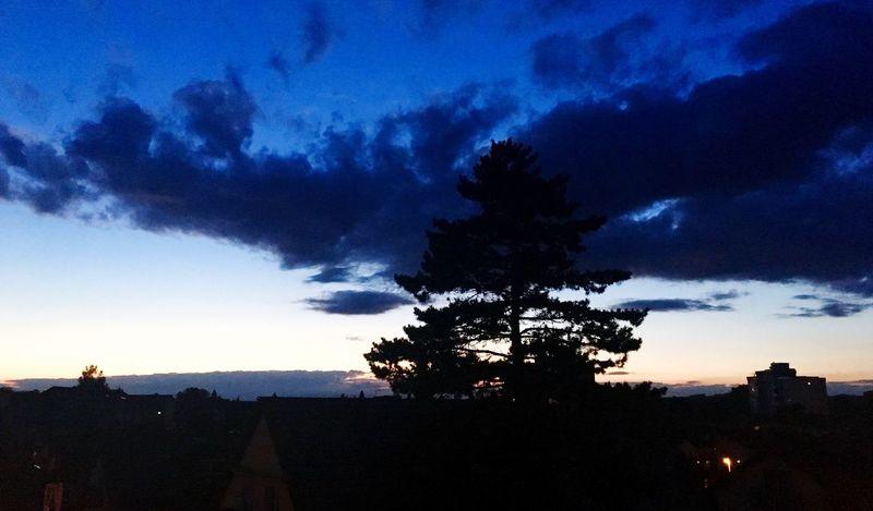 Baum Abend Sommer Tchutchu