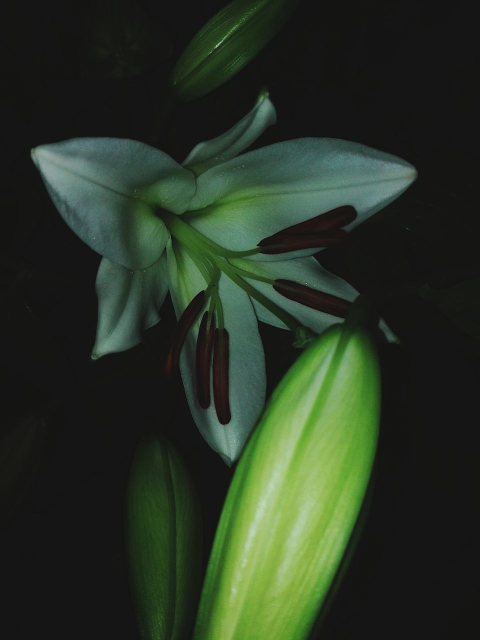 no people, green color, freshness, growth, petal, close-up, flower, nature, beauty in nature, leaf, fragility, flower head, day, outdoors
